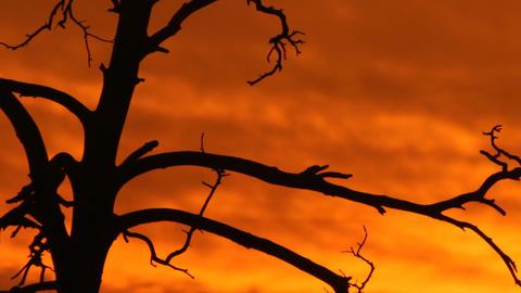 Burning Sunset stock footage