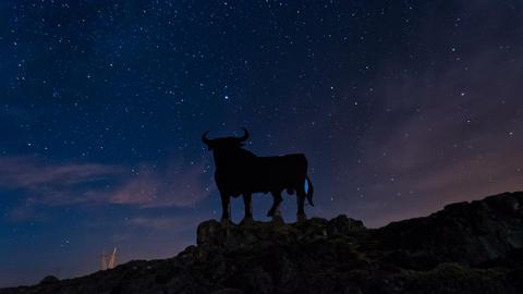 4K Night Sky Star Timelapse and Black Bull in Spain Footage