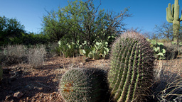 arizona cactus america nature Footage