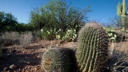 arizona cactus america nature Footage