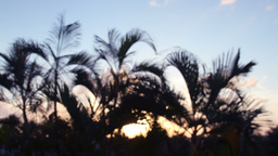 palm trees at sunset 4k Footage