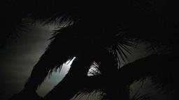 Joshua Tree Moon 1 2012 Footage