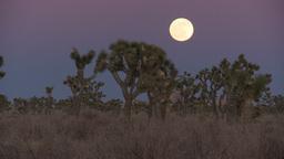 Joshua Tree Moon 3 2012 Footage