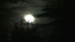 Joshua Tree Moon 5 2012 Footage