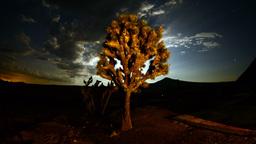 July Mojave Preserve 7 2k Footage