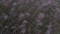 Meadow Footage