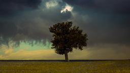 4K Landscape Timelapse Tree In Meadow stock footage
