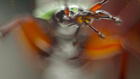 Scary Macro Shot Of Green Beetle Mouth Parts stock footage