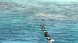 gull in the red sea Footage
