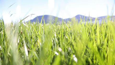 Camera moving through green grass in the Alps moun Footage