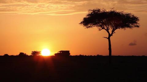 Car Goes On Savanna At Sunrise stock footage
