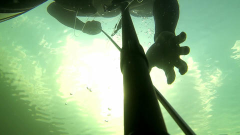 Diving spearfisher handling speargun Footage