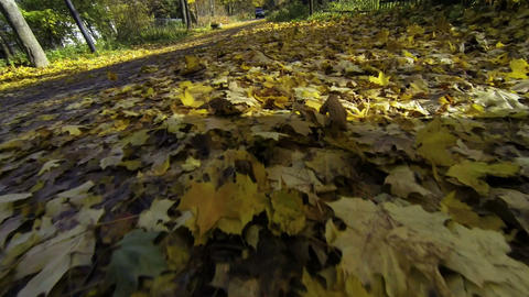 Yellow leaves on the road Footage