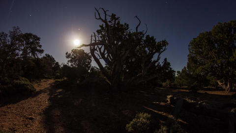 Wide shot of moonrise with moving shadow of trees Footage