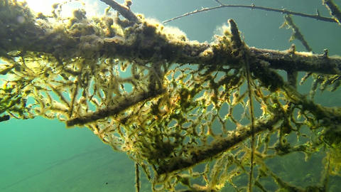 Old fishing nets stuck on a submerged tree Footage