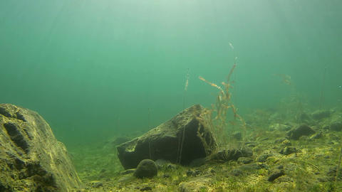 Underwater Landscape With Gleaming Sunrays stock footage