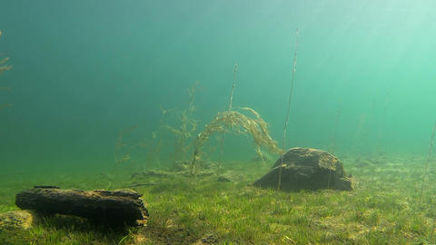Underwater landscape in lake Valkiajärvi Footage