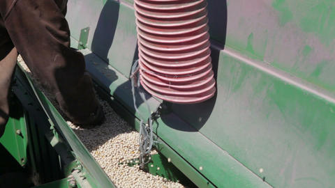 Pea Grain Is Poured Into The Drill stock footage