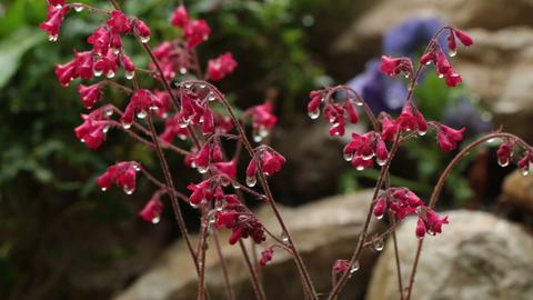 Water drops falling on flower Footage
