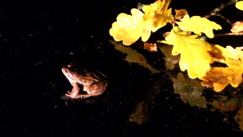 frog on road dark background Footage