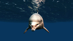 Dolphin Stock Video Footage