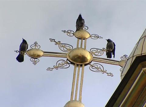 Ravens stock footage