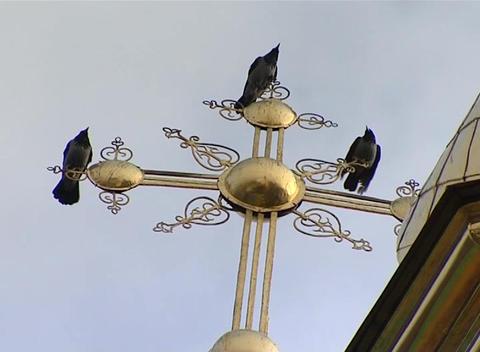 Ravens Stock Video Footage