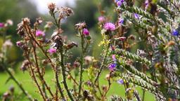 Wild Flowers 02 Footage
