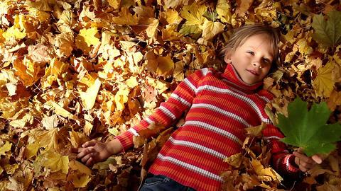 Sunny Autumn Stock Video Footage
