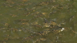 large shoal of fish Stock Video Footage
