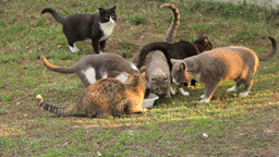 group of cats Stock Video Footage