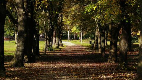 4 K Autumn Road under Deciduous Trees 1 Footage