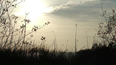 Autumn Lakeside Sunset 1 Footage