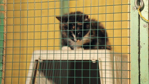Animal shelter, cat in a cage Live Action