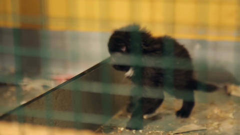 Animal shelter, black kitten in a cage Live Action