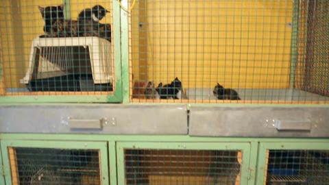 Animal shelter, animals in cages at the animal she Stock Video Footage