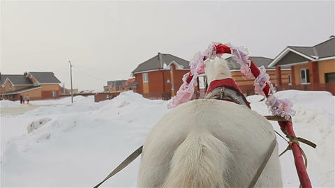 Riding in a sleigh, rear view of a horse, tail Footage