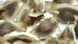 Raw Moringa Seeds Macro Dolly stock footage