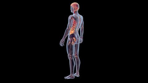 Human Anatomy, Stock Animation