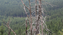Dead trees caused by the co2 and so2 emission Live Action