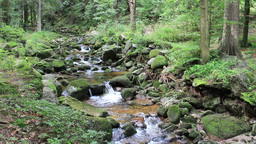 Magical mountain brook with a mossy rocks Live Action