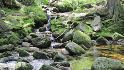 Mountain brook with a mossy rocks in the forest Live Action