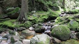 Magical, wild forest with a pure water in a brook Live Action