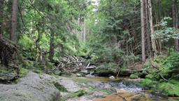 Stream of water in the wild forest Footage