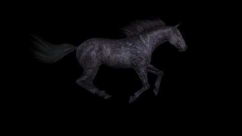 Horse Gallop - Black - Side - Loop - Alpha stock footage