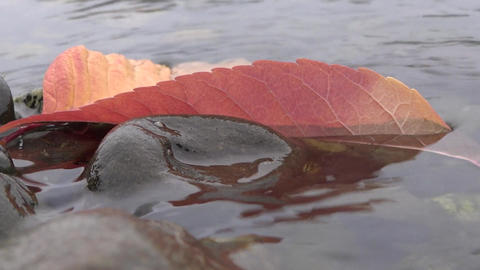 Autumn Leaves In Water Waves - 02 - Close-Up stock footage