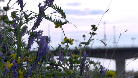 City Bridge & Wild Flowers stock footage