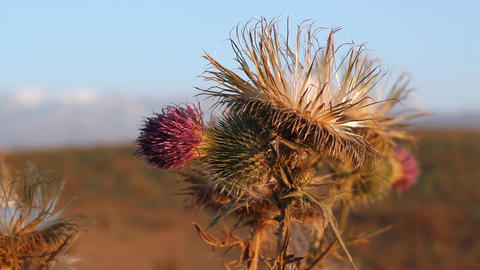 Prickly plant 15 Stock Video Footage