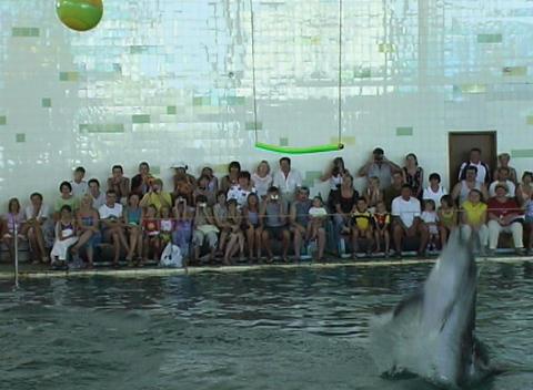 dolphin jump Footage
