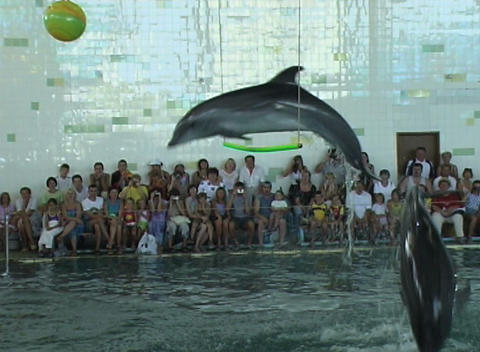 dolphin jump Stock Video Footage